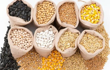 Kinh doanh thức ăn chăn nuôi cần phải chú ý những yêu cầu gì ? Làm cách nào để kinh doanh thành công, hiệu quả?