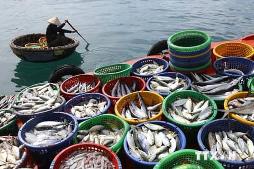 Bí quyết kinh doanh thủy hải sản tươi sống hiệu quả dành cho người mới bắt đầu khởi nghiệp.