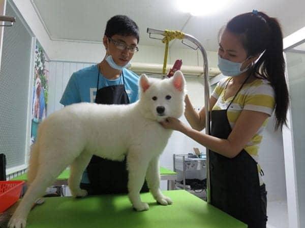 bí quyết kinh doanh phòng khám cho thú cưng