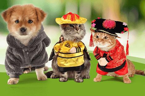 Bí quyết kinh doanh phụ kiện thú cưng online