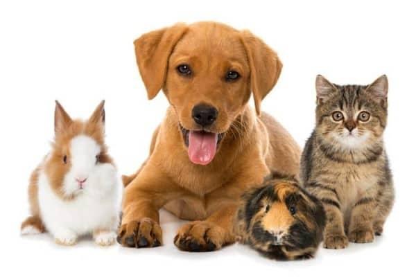 Mở cửa hàng kinh doanh thú cưng như nào để hiệu quả đơn giản?