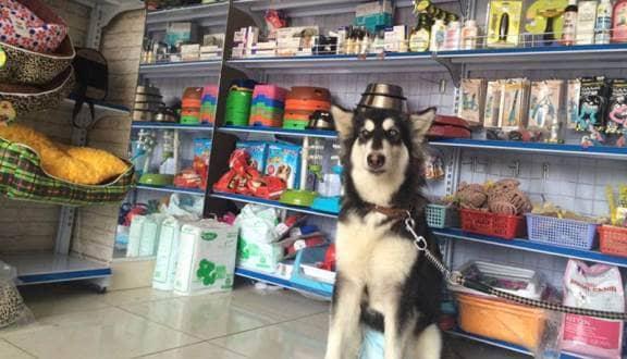 Mở cửa hàng phụ kiện thú cưng